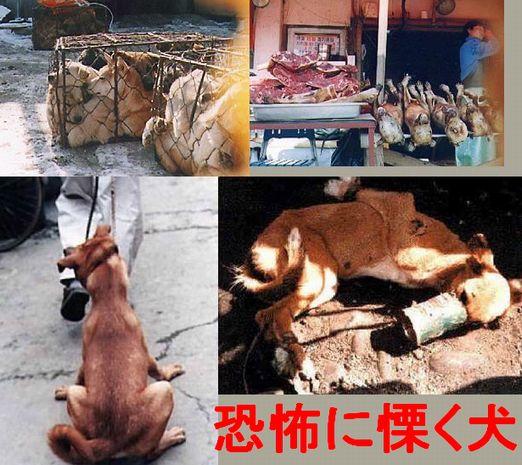 【日本紹介】日本在住の外国人の動画について話合うスレPart73 [無断転載禁止]©2ch.net [無断転載禁止]©2ch.netYouTube動画>41本 ->画像>75枚
